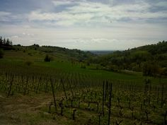 Cascina Gilli vineyards in Castelnuovo Don Bosco (Piemonte). Photo by Chiara Martinotti.