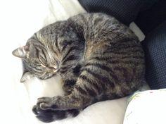 Mijn lieve lieve kat