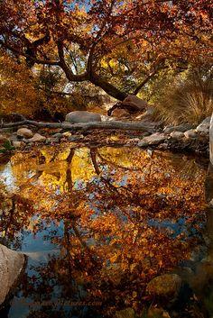 Madera Canyon, Arizona; photo by Greg McCown*