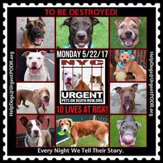 TO BE DESTROYED 05/22/17 - - Info   To rescue a Death Row Dog, Please read this:http://information.urgentpodr.org/adoption-info-and-list-of-rescues/  To view the full album, please click here:http://nycdogs.urgentpodr.org/tbd-dogs-page/ -  Click for info & Current Status: http://nycdogs.urgentpodr.org/to-be-destroyed-4915/