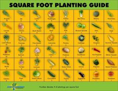 1000 ideas about homesteading garden on pinterest container gardening fruit trees and - Spacing planting vegetables guide ...