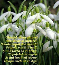 8 Martie, Spring Time, Flowers, Plants, Plant, Royal Icing Flowers, Flower, Florals, Floral