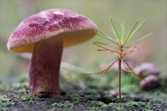 pictures of mushroom