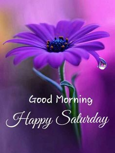 Good Morning Happy Saturday, Good Morning Roses, Good Morning Greetings, Good Morning Images, Day And Night Quotes, Morning Quotes, Morning Board, Morning Motivation, Purple Flowers