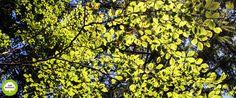 Los bosques caducifolios son las principales formaciones existentes en la primera, mientras que en el sur de la Comunidad predominan los encinares junto a áreas arbustivas propias de zonas esteparias. Existe además una zona intermedia en la que se mezclan el bosque caducifolio, propio de zonas lluviosas, con otras especies mediterráneas como la encina.