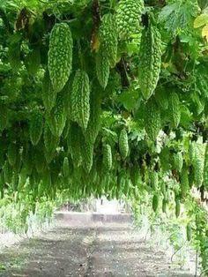 - Agriculture Job - Ideas of Agriculture Job - Backyard Vegetable Gardens, Vegetable Garden Design, Fruit Garden, Garden Plants, Fruit Plants, Edible Plants, Fruit Trees, Types Of Vegetables, Planting Vegetables
