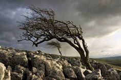 Yorkshire Dales National Park, North Yorkshire, England, UK