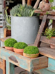 love the usage of old drawer for plant container