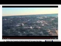 """100,000 dolphins - Super Pod Gather on South California Coast - Youtube ...  Published on Feb 18, 2013   Thousands of dolphins were spotted off the coast of San Diego by passengers aboard a tour boat, which then followed the """"super mega-pod"""" for more than an hour.                                                Thousands of dolphins were spotted off the coast of San Diego by passengers aboard a tour boat, which then followed the """"super mega-pod"""" for more than an hour."""