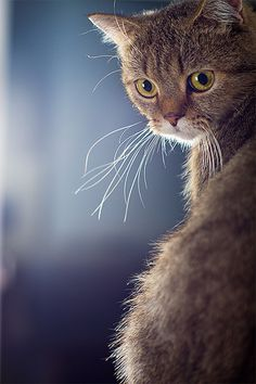 cat by xiaozhen on flickr