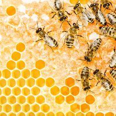 Why not consider urban beekeeping? - GardenBird
