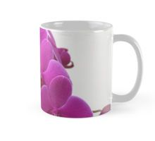 Cup, Orchid flower, In stock