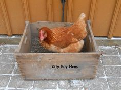 "A Relaxing Dust Bath A healthy and good smelling chicken NEEDS to take a dust bath on a regular basis. Chances are if your chicken is ""not too fresh,"" then"