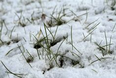 A Life Lounge: Een ode aan de winter Snow, Grass
