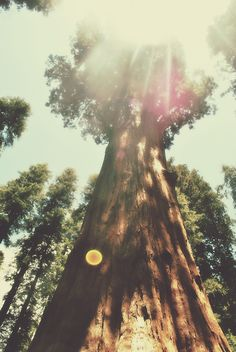 ♥ ✿⊱╮♥ Nature ♥ ✿⊱╮♥