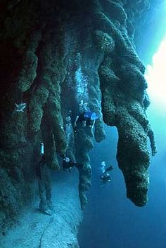Blue Hole Belize--photo at about 130 feet below the surface..Just returned from diving there...and these stalactites are amazing apparently they were above the surface of the sea millions of years ago.