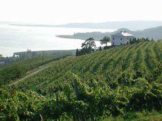 Lake Balaton, Wine Country, Hungary