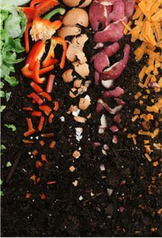 Composting Guide and What and what not to compost