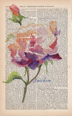 Antique Rose On Antique Paper Painting by Maria Hunt