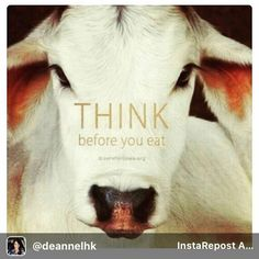 #vegan fro cruelty-free dining