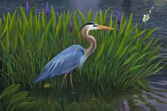 Great Blue Heron Oil on canvas