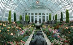 When we just can't take winter anymore, we go to the Como Conservatory.