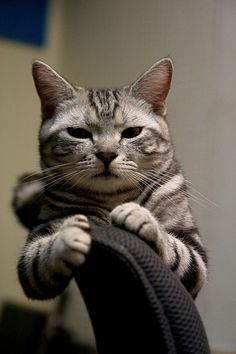 """""""Cats have an infallible understanding of total concentration--and get between you and it."""" --Arthur Bridges"""