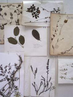 Image of Large Collection of Pressed Flower Pages - Swarm