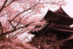 旅の専門家が選ぶ!今年こそ見たい桜&お花見名所まとめ2014 | [たびねす] by Travel.jp