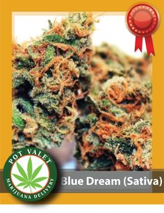 For those, dealing with #stress or #anxiety, Super Blue Dream California – Sativa is a good strain to try out. This #strain has a sour #blueberry #aroma and great for daytime use. Get it here.   #marijuana #Elmira #cannabis #medicalmarijuana #CannabisStra