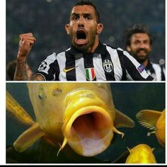 Śmieszny mem po meczu Juventus Turyn vs Real Madryt • Carlos Tevez jak ryba cieszy się z gola • Zobacz podobieństwo Teveza do ryby >> #tevez #juve #juventus #football #soccer #sports #pilkanozna #funny