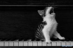 Musical kitteh