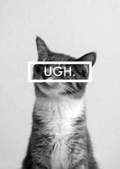 Sassy cat◆
