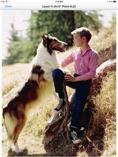 Older Timmy and Lassie