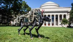 MIT's Cheetah robot is let off its leash, can now run and jump silently across fields - Skylight News Terrain Vehicle, Massachusetts Institute Of Technology, Mad Science, Science News, Can Run, Sci Fi Fantasy, Four Legged, Cheetah, Fields