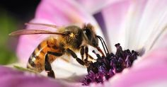 U.S. court overrules EPA on bee-killing pesticide