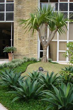Pândanus com Agaves para o jardim de entrada de um Edifício comercial.