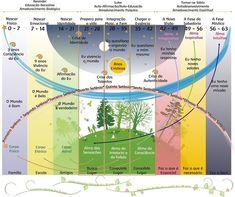 Compreendendo as fases da vida