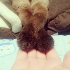 All About Animals, I Found You, Cat Paws, Fur Coat, Hands, Friends, Brown, Amigos, Brown Colors