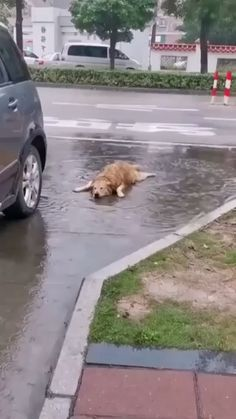 Animal Jokes, Funny Animal Memes, Dog Memes, Cute Funny Dogs, Cute Funny Animals, Funny Dog Pics, Funny Walk, Funny Pugs, Funny Animal Videos