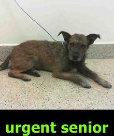 PANCHO (A1515388) I am a male brown Terrier mix. The shelter staff think I am about 7 years old. I was turned in by my owner and I may be available for adoption on 07/11/2016. — Miami Dade County Animal Services. https://www.facebook.com/urgentdogsofmiami/photos/a.474760019225073.115405.191859757515102/1236380443063023/?type=3&theater