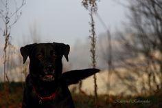 Cane, Abra, nero,dog,
