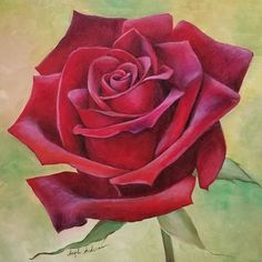 Image may contain: flower and plant Painting The Roses Red, Acrylic Painting Flowers, Acrylic Painting Tutorials, Acrylic Art, Watercolor Flowers, Watercolor Paintings, Realistic Flower Drawing, Red Rose Drawing, Paper Flower Patterns