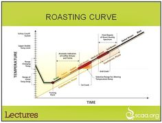 Coffee Bean Roasting Curve