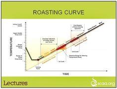 Coffee Bean Roasting Curve