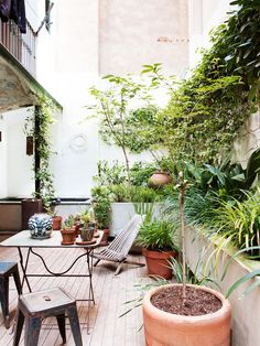 Lush green garden patio in Barcelona with climbing vines and potted trees..