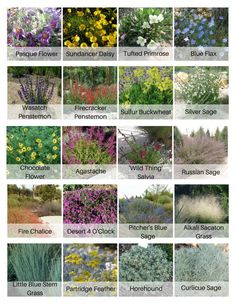 Designing a drought-tolerant landscape?  Select at least one plant from each row