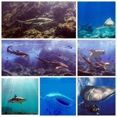 A few of our favourite shark encounters! #sharksaturday . #sharklife #lovesharks #scuba #kohlanta #scubadiving #scubaadventures #islandlife #lovesunderwater #learntodive #scubajunkies