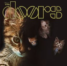The doors album cover with cats Famous Album Covers, Rock Album Covers, Classic Album Covers, The Doors, Crazy Cat Lady, Crazy Cats, I Love Cats, Cool Cats, The Big Theory
