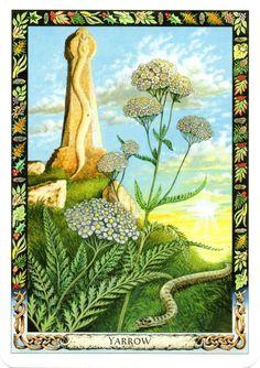 Druid plant oracle: yarrow